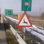 Şoferii care circulă pe A1, între Ilia și Holdea, avertizaţi în privinţa animalelor