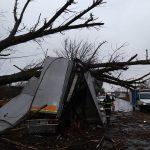 Vântul a doborât copaci peste maşini la Timişoara