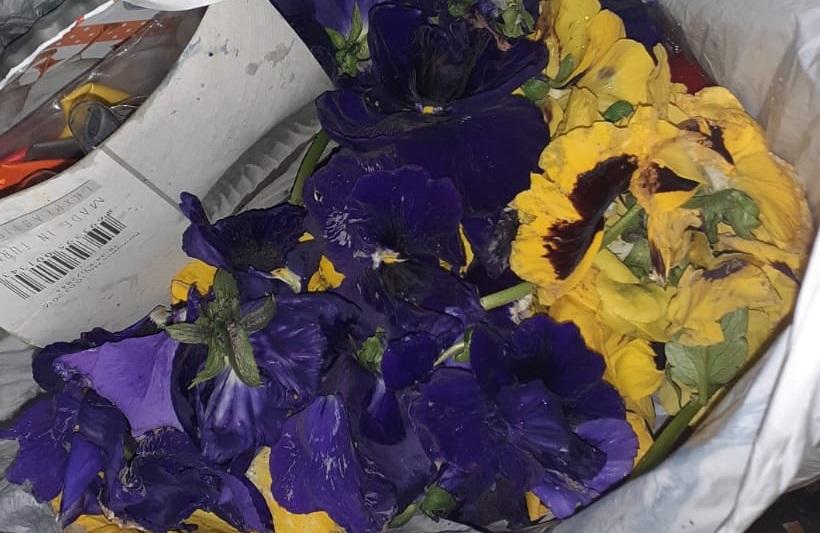Tânăr din Maroc, amendat după ce a rupt florile de pe Podul Michelangelo