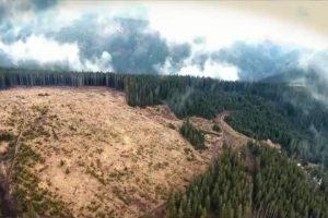 Deputatul Marian Cucşa cere informații de la SRI pe subiectul defrișărilor de păduri