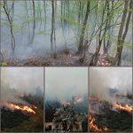 Arde pădurea lângă Tomeşti