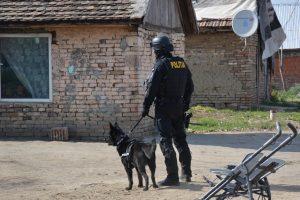 Razie cu mascaţi în Sânnicolau Mare. Câte amenzi au dat oamenii legii