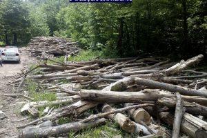 Acțiune pentru combaterea delictelor silvice in Arad