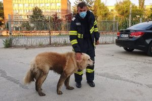 Pompierii au salvat un blănos căzut într-un canal