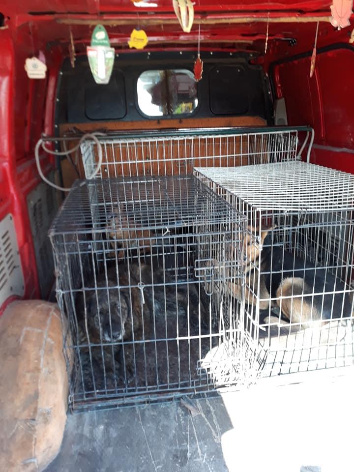 O firmă de ecarisaj adună câinii fără stăpân din Săcălaz