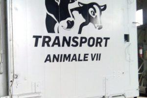 Klaus Iohannis a promulgat legea privind transporturile de animale vii