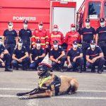 Pompierii timişoreni o sărbătoresc pe Sema de Ziua Internaţională a Câinilor
