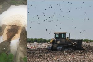 PMP Timiș cere explicații la nivel guvernamental pentru posibilul dezastru ecologic de la Ghizela