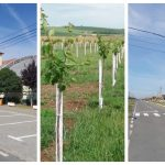 Primarul orașului Recaș, Pavel Teodor, despre infrastructura rutieră și investiții
