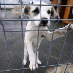 Prevederi legale noi în domeniul protecției animalelor