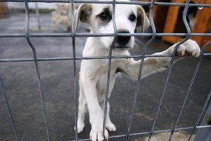 Iubitorii de animale pot dona hrană pentru câinii abandonați