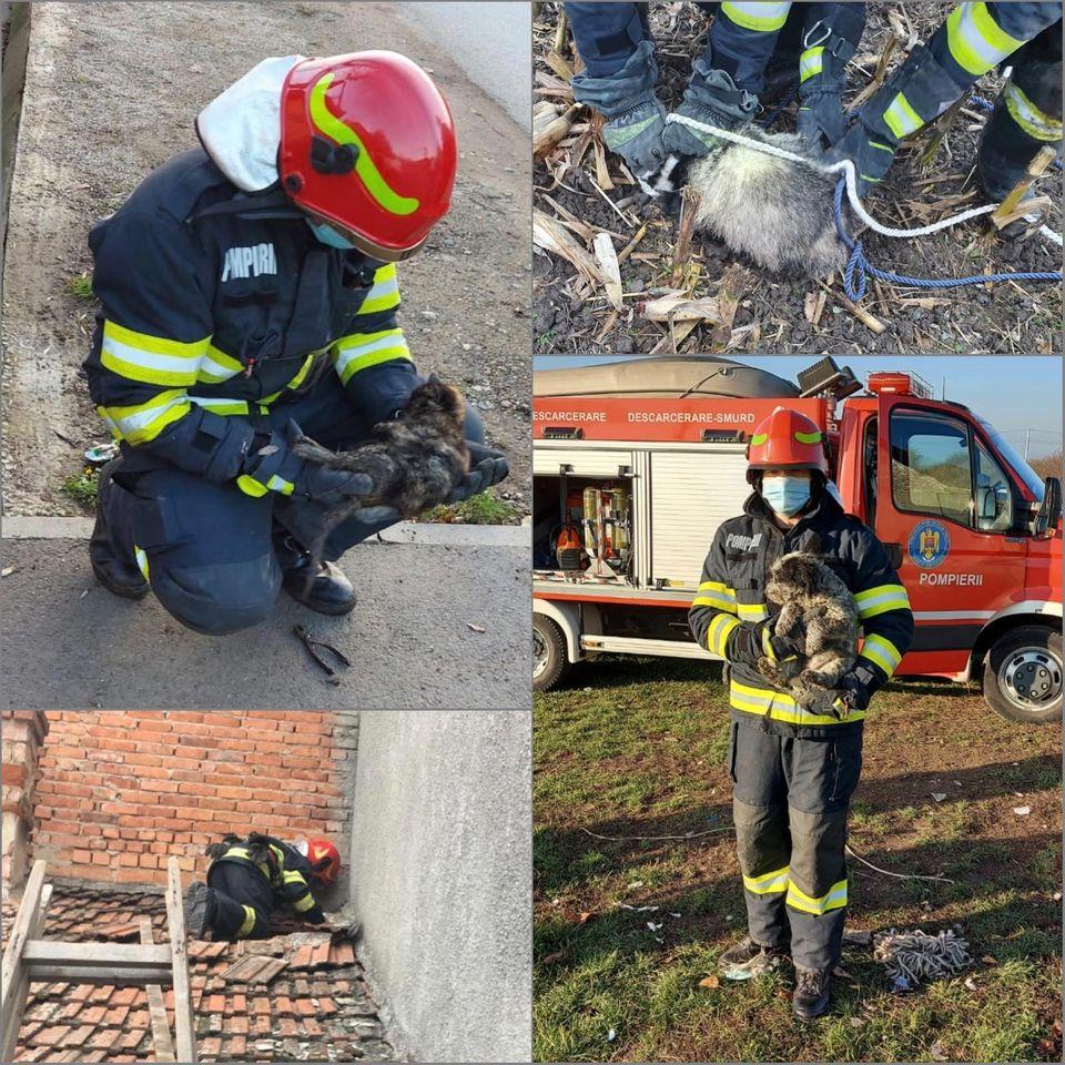 Pompierii au salvat un cățel, două pisici și un bursuc