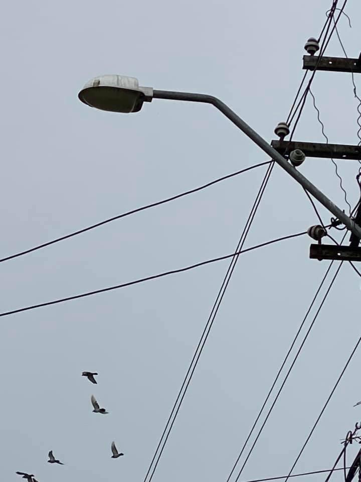 Timișenii, chemați să pună umărul la eficientizarea energetică a județului