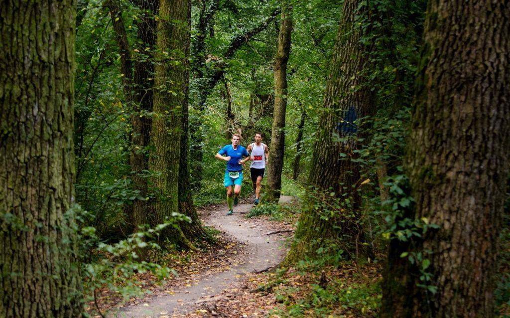 Pădurea Verde poate deveni cea mai mare pădure-parc din sud-estul Europei, cu condiția ca Primăria Timișoara să o amenajeze