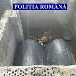 Animale ținute în condiții insalubre în comuna Șiria