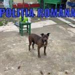 Trei câini de rasă găsiți în stare precară, confiscați de polițiști