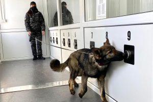 Proiect inedit: depistarea virusului SARS-CoV 2 cu ajutorul câinilor special dresați