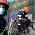 Pompierii de la ISU Timiș au salvat un cățel blocat într-un canal