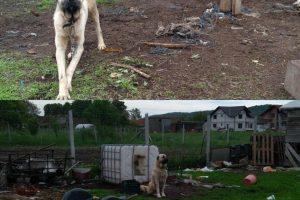 Acțiune pe linie de prevenire și combatere a actelor de cruzime față de animale