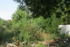 De luni, Poliția Locală demarează ample acțiuni de verificare a modului de întreținere a terenurilor