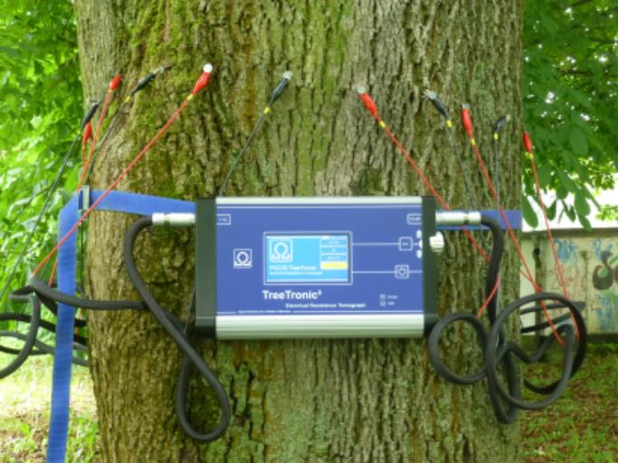 Au fost lansate procedurile pentru cumpărarea tomografului pentru copaci