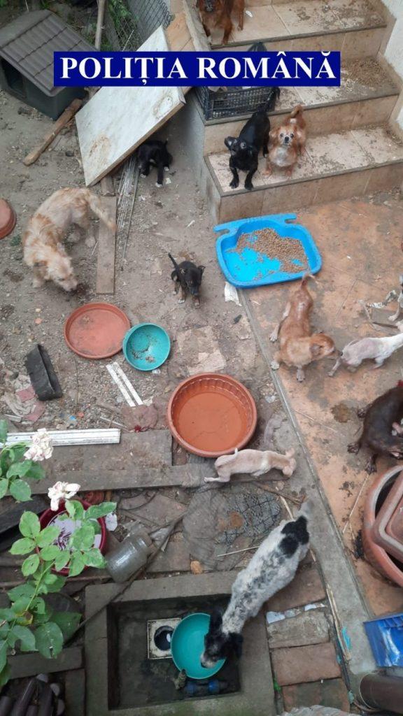 38 de câini și 9 pisici, salvați dintr-o curte din Arad