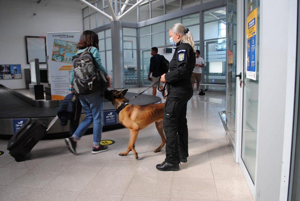Câini antrenați să depisteze persoanele infectate cu Covid, la aeroportul din Sibiu
