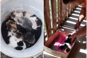 Un frigider și 7 pisicuțe, abandonate într-o parcare pe DN 69 Timișoara – Arad