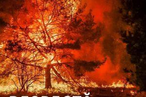 Cu incendiile de vegetație nu e de joacă, iar acest lucru se vede cel mai bine în Grecia sau Turcia!