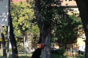 Primăria Timișoara, în relație foarte proastă cu Horticultura. Au ajuns voluntarii să taie crengile din parcuri
