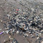 Primarul Viorel Mărcuți le bate obrazul consătenilor care fac mizerie în parcul din Utvin